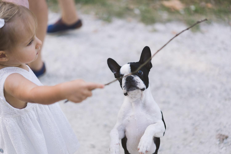 un perro, la mascota de la familia, jugando con un palo
