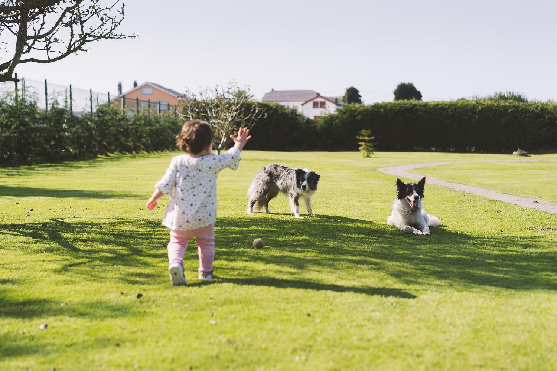 niña y dos border collie